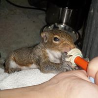 squirrel being fed